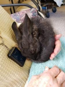 Smokey the bunny
